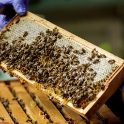 Why Beekeeping is the Ideal Pastime for Our Current Lifestyle