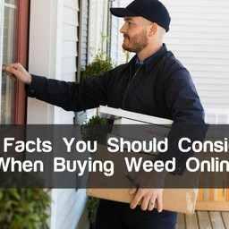 6 Facts You Should Consider  When Buying Weed Online
