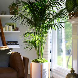 Adorable Though Large Indoor Plants