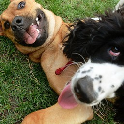 5 Ways to Make Your Dog More Happy