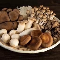 Top Features of Magic Mushroom Edibles that Everyone Loves