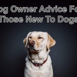 Dog Owner Advice For Those New To Dogs