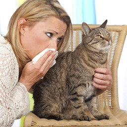 You can be allergic to your cat, but did you know your cat can also be allergic to you?